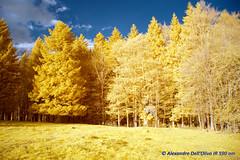 590nm_DSC1602 (achrntatrps) Tags: 590nm kolarivision photographe photographer alexandredellolivo dellolivo suisse nikon d5300 ir infrarouges lumière light licht luz jura
