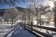 Winter flashback (mystero233) Tags: winter gosau austria morning cold snow frost frozen mist sun sunrise dawn trees tree sky blue white shadow landscape outdoor fence wood