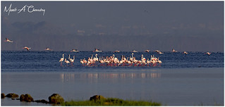 Flamingo's on the Lake!