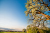 Springtime (Andy Brandl (PhotonMix)) Tags: landscape blooming spring trees growth freshness allnew photonmix germany kraichgau tranquility beauty