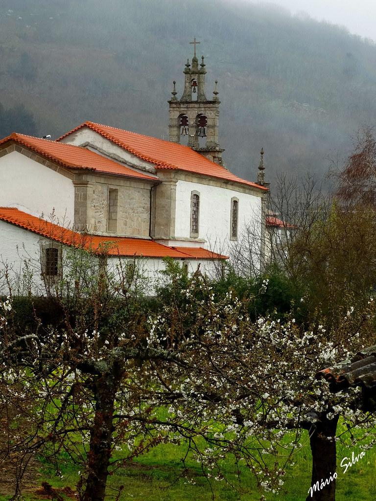 Águas Frias (Chaves) - ... as cerdeiras (cerejeiras) em flor e a igreja matriz ...