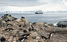 M. V. Orion in Antarctica (trphotoguy) Tags: antarctica antarcticpeninsula penguin penguins mvorion