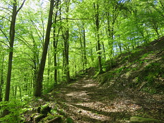 IMG_0067x (gzammarchi) Tags: italia paesaggio natura montagna sangodenzofi crocione bosco strada sentiero