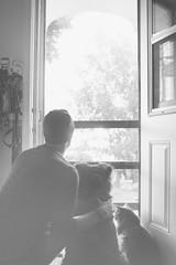 Can We Go Outside to Play? Puh-leeeease??? (flashfix) Tags: july182018 2018inphotos ottawa ontario canada nikond7100 28mm portrait man scott fyero nebelung ragamuffin ragdoll fluffy graycat familyportrait blackandwhite monochrome sock dog canine animal pet austrailanshepherd triaustrailanshepherd bluemerle tricolour heterochromia door