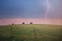 :: dakota strike :: (mjcollins photography) Tags: southdakota prairie summer storm clouds weather lightning strike cows field sun set