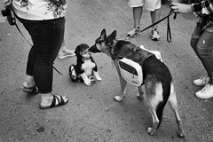Meet and Greet (mfhiatt) Tags: img23170718jpg market dogs farmersmarket downtownfarmersmarket blackandwhite desmoines iowa