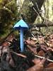 IMG_1010 (Siôn J. Lewis) Tags: newzealand moana westcoast blue mushroom werewerekokako entoloma hochstetteri