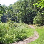 Woodland bathed in glittering summer sunlight thumbnail
