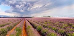 Lavender fields (jocsdellum) Tags: lavanda fields provence provenza france francia camposdelavanda lavender cielo cel sky núvols nubes clouds valensole