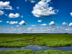 Landscape (2) (hoedh) Tags: pentax 645z 55mm landscape marshland michigan saginaw