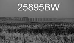 robfrance5d2_25895bw_280218_x158xxx_ribblehead_viaduct_2h95_nt_edr16lr6sefx2pse15weblowres (RF_1) Tags: 158 2018 arriva bad badweather battymoss brel britain british britishrailengineering class158 cold coldweather covered dales db deutschebahn dieselmultipleunit dmu dusk england europe european franchise localtrain localtrains northern northernengland northernrail passengertrain publictransport rail railroad rails railway railways ribblehead ribbleheadviaduct rural sc settlecarlisle snow snowing sprinter stoppingtrain stoppingtrains train trains transport travel traveling twilight uk unitedkingdom viaduct weather white winter yorkshire