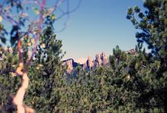 Vacation Black Hills (skua47) Tags: animal bison blackhills events places scenic southdakota unitedstates vacation mammal