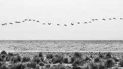 suspension points (*BegoñaCL) Tags: pájaro blancoynegro horizonte mar mediterráneo cielo begoñacl agua animal