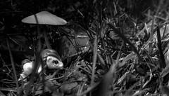 Quelque part dans la forêt de Brocéliande (misterblue66) Tags: a6000 sony bn bw nb noiretblanc poney littlepony pony mushroom champignon brocéliande forêt forest broceliandeforest toys jouet figurine blackwhite