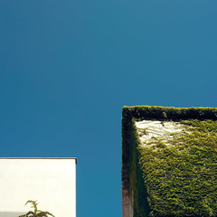 White Square, Green Square, Blue Sky (josemanuelerre) Tags: plant green building minimal architecture hipster climbingplant creeper climber square decor nature facade natural white blue sky environment street landscape cityscape outdoors urban vegetal abstract shadows composition modern contemporary lonely minimalism clear silence quiet stilllife popart pop inspiration minimalist detail city daily light day summer