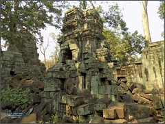 Angkor, Ta Prohm Temple 20180202_133029 DSCN2544 (CanadaGood) Tags: asia seasia asean cambodia siemreap angkor taprohm temple building architecture archaeology tree canadagood 2018 thisdecade color colour buddhist hindu khmer