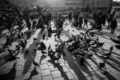 tales of ordinary chaos / to notice a tree in the forest (Özgür Gürgey) Tags: 2017 20mm bw d750 eminönü nikon voigtländer birds crowded flying motion pigeons shadows street istanbul