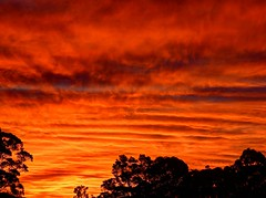 Winter sunset series II 4/9 (elphweb) Tags: hdr highdynamicrange sunset nsw australia sky skies clouds cloudy trees silhouette silhouettes sun red rose blue orange colourful colorful colour color brilliant bright