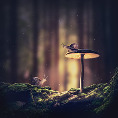 Deep forest (Ro Cafe) Tags: photomanipulation fantasy surrealism conceptual nature forest mushroom snails moos trees dark light photoshop magic