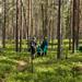 ... e pela floresta...
