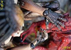 №556 (OylOul) Tags: oyloul 2018 q3 july 16 action figure hottoys predator alien neca