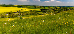 Stoke Farthing, Wiltshire (cantdoworse) Tags: wiltshire stoke farthing dandy lions farms landscape broadchalke salisbury england canon 6d
