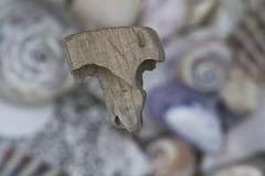 T is for Trinket! (brucetopher) Tags: macromondays trinkets trinket wood wooden t lettert letter wormeaten worm woodworm shipworm driftwood