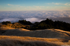 (kayters) Tags: kaytedolmatchphotography kathleendolmatch mttamalpias mttam fog sunset naturallight mountains millvalley marinheadlands bayarea northerncalifornia summer july travel explore landscape westcoast trees coastal