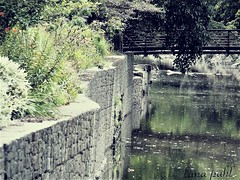 emerald creek (Lana Pahl / Country Star Photography) Tags: riversstreams creeks