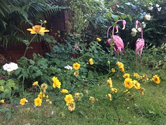 Flamingos amidst the flowers (markshephard800) Tags: fern flowers flamingos art sculpture garden jardin jardim garten giardino tuin fleurs blumen bloemen birds fiori flores flora