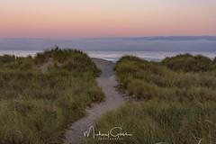 Morning Hike On The Beach (NikonDigifan) Tags: oregon oregoncoast manzanitaoregon beach sunrise sanddunes grass path sand fog nikond750 nikon28300 mikegassphotography pacificocean pacificnorthwest westcoast