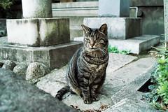 neko-neko2177 (kuro-gin) Tags: cat cats animal japan snap street straycat 猫 sigma dp2