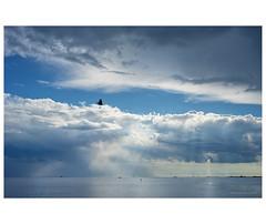 _PXK4511 (Concert Photography and more) Tags: 2018 july italy grado gorizia landscape clouds cloudscape bird flying sea beach seashore horizon pentax k1ii meyeroptic meyeroptikgorlitz 35 liveactionhero