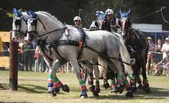 Riesenbeck Fahrturnier (ow54) Tags: riesenbeck fahrturnier fahrsport pferde horses vierergespann vierspänner carriage driving schimmel