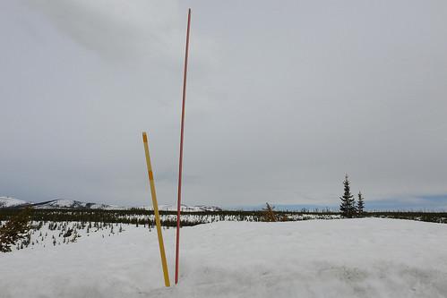 Yellowstone - Snow Marker