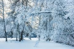 cool down (traumlichtfabrik) Tags: 2017 austria january snow tirol tyrol winter winterwonderland österreich imsterberg cold cool at tree forest