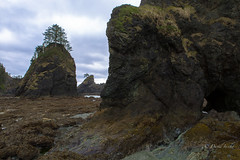 No easy passage (D. Inscho) Tags: olympiccoast pointofthearches pacificnorthwest washington seastack arches coast