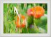Amapolas # 3881 (Víctor J. López) Tags: flores pictoralismo flowers poppies painting springtime art