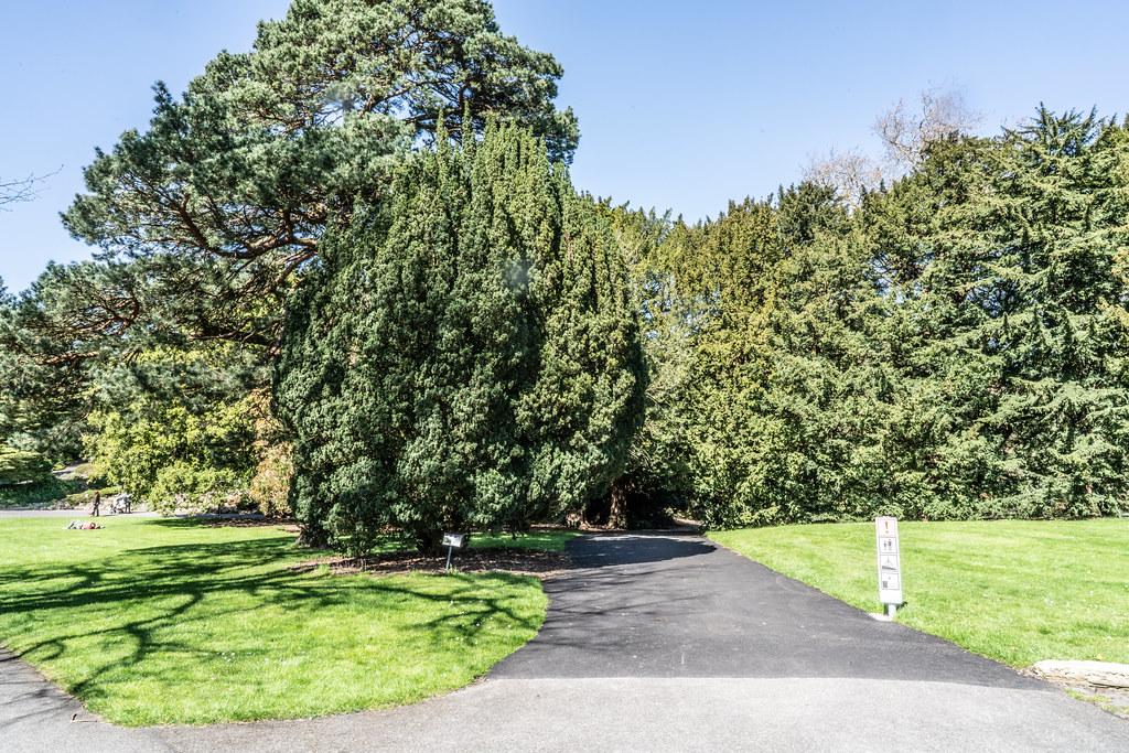 VISIT TO THE NATIONAL BOTANICAL GARDENS [GLASNEVIN DUBLIN]-138543