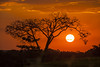 por-do-sol - sunset (ricardo japur) Tags: nature wild cerrado trees árvores pordosol sunset
