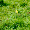 Croft Hill 22nd April 2018 (boddle (Steve Hart)) Tags: stevestevenhartcoventryunitedkingdomcanon5d4 croft hill 22nd april 2018 steve hart boddle steven bruce wyke road wyken coventry united kingdon england great britain canon 5d mk4 6d 100400mm is usm ii 2470mm standard wild wilds wildlife life nature natural bird birds flowers flower fungii fungus insect insects spiders butterfly moth butterflies moths creepy crawley winter spring summer autumn seasons sunset weather sun sky cloud clouds panoramic landscape huncote unitedkingdom gb