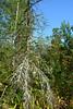 DSC_9813 (sevbette) Tags: лес осень