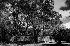 Relocated (John Ilko) Tags: 500px abandoned oldstructure vintage mobilehome home palmetto florida country rural fujifilm xe2 18mm monochrome