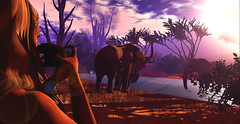 Safari morning (MoniKa Dieterle) Tags: monica dieterle model photographer photography animal elephant safari africa world earth flickrunitedaward