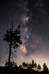 Pine trees and the Milky Way In Mount Laguna (slworking2) Tags: julian california unitedstates us milkyway mountlaguna pines pinetrees trees night clevelandnationalforest