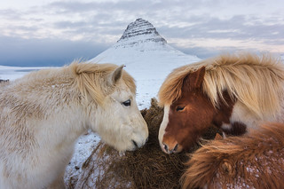 Wild Horses of the North