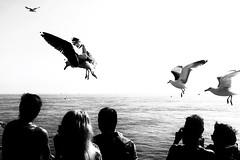 Moving Moments (marfis75) Tags: schiff shipping ocean northernsea boat flieger flug fliegen gliegen gull seagull möwen möwe moving holland netherlands niederlande creativecommons cc marfis75 fähre ferry bewegen bewegung move