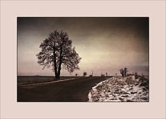 Tree Булат Шалвович Окуджава (piontrhouseselski) Tags: cz south moravia analog minolta tree filmcamera