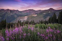 Crested Butte (Jeremy Duguid) Tags: crested butte colorado travel nature landscape sunrise morning hike hiking outdoors trails mountains sony jeremy duguid flowers wildflowers clouds