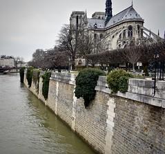 Notre-Dame de Paris (SarahCuse315) Tags: de paris notre dame notredamedeparis gloomy seine france europe francia ancient flyingbuttress architecture gargoyle rose